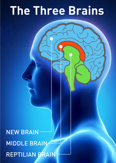 the limbic system human brain function When we talk about parts of the brain and their functions, brain stem should never be overlooked the brain stem is located underneath the limbic system this section of the brain is tasked with the duty of supervising important tasks such as blood pressure, breathing and heartbeat.
